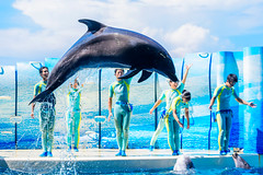 Jump! At the Dolphins and Sea Lions Show of Enoshima Aquarium, Fujisawa : イルカとアシカのショー(新江ノ島水族館) (Dakiny) Tags: 2018 summer august japan kanagawa fijisawa shonan shonancoast enoshima kataseenoshima park aquarium enoshimaaquarium city street beach outdoor show animalshow creature animal mammal seaanimal marineanimal dolphin people portrait man woman girl bokeh nikon d750 sigma apo 70200mm f28 ex hsm apo70200mmf28dexhsm sigmaapo70200mmf28dexhsm