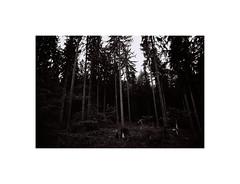 (kotmariusz) Tags: forest woods trees las drzewa nature natura blackandwhite monochrome 35mm filmphotography poland