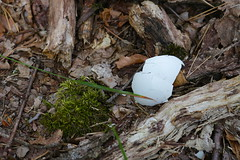 untitled (Binacat) Tags: canon eos 750d berlin eichwalde wald woods forest nature natur waldboden forestsoil floor boden moos moss eggshell eierschale wood holz color