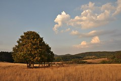 (Uli He - Fotofee) Tags: ulrike ulrikehe uli ulihe ulrikehergert hergert nikon nikond90 fotofee weinberg hünfeld naturschutzgebiet silberdistel abendlicht kegelspiel steppe hitze wolken