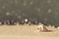 Beauty Undefined (HW111) Tags: definingbeauty macromondays bokeh macro ocean shell pastels seashell creativity eckharttolle