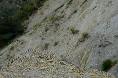 Composition naturelle (RarOiseau) Tags: esparron montagne hautesalpes falaise rocher marne saariysqualitypictures