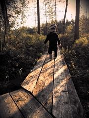 Little adventurer (Vesa Thynell) Tags: boy child baby nature sunset forest lake pond family love son duckboards pitkospuut metsä luonto lampi kantahäme häme poika lapsi taapero auringonlasku retki erä trip kesä aurinko
