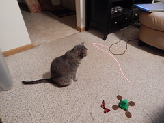 DSCN3246 (mestes76) Tags: 100617 duluth minnesota cats pets fetty fettucini cattoys laserpointer playing