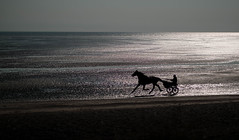 Dark rider (V Photography and Art) Tags: horse silhouette light backlit seaside bythesea