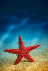 Starfish on the clean golden sand. (hoboton) Tags: background beach beam beautiful beauty closeup coastline color concept copyspace design diving element exotic gesture holiday marine natural nature object ocean one ray recreation red resort sand sea seashore shore space star starfish summer texture textured travel tropical tropics underwater vacation water welcome yellow dark bubbles blue air