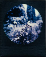 winter (somekeepsakes) Tags: schnee impossible instant blackframe tip colorfilmforsx70 film snow analogue 2017 theimpossibleproject winter sx70 polaroid roundframe analog sofortbild