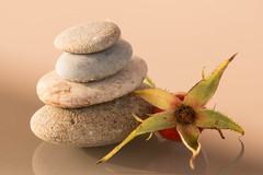 Autumn stones (Gisou68Fr) Tags: macromondays rock stones rosehip