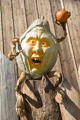 wütender kürbis (mwo_w_GERMANY) Tags: mario wolff mwoaqwode aqwocom aqwode wwwaqwocom wallpaper hintergrundbild hinter halloween krübis kürbis wütend geschnitzter geschnitzt angry pothiron pumpkin colere colére rage klaistow spargelhofklaistow mwopicscom wwwmwopicscom