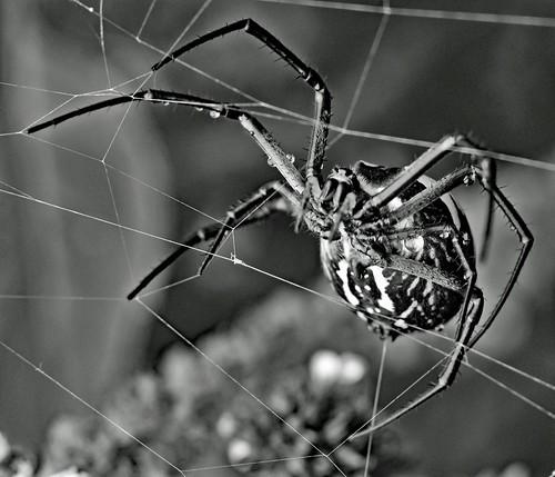 Rebuilding Her Web