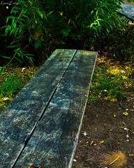 Sit, think then move (lana.cumps) Tags: love life moving move thinking sit bench plants green naturephotography naturephotos naturephoto naturepics naturepic nature