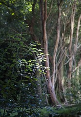 reference-120 (TLCStudentReferences) Tags: helenastackhouse lichen moss tree leaves fun bokeh nz