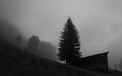 In the Mood (Netsrak) Tags: at alpen alps baum berg bäume eu europa europe landschaft natur nebel wald fog landscape mist mountain nature woods kleinwalsertal mittelberg baad