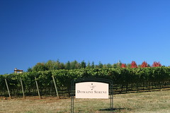 IMG_6625 (willsonworld) Tags: willamette valley wine tasting dan diane cat jose david dave grapes 2014