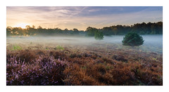 Sunrise at Eckeltse heide (Rob Schop) Tags: wideangle zonsopkomst landscape hoyaprofilters sonya6000 mist nederland outdoor clouds ochtend morning limburg pscc pola nationaalparkmaasduinen samyang12mmf20 heide fog a6000 lrcc sunrise heijderbos eckeltseheide merge