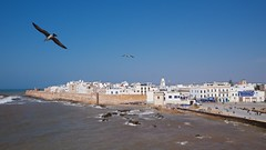 Essaouira II (pan_orama) Tags: marokko maroc morocco essaouira beach harbour seagulls fish sun color travel