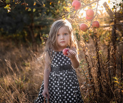 _MG_9156-Edit2-4 (Sagala Fotografie) Tags: blonde girl babygirl child childrenphotography childrenphotographer children photosession outdoor apples fotograf fotografia fotografdziecięcy dziecko dziecięca