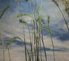 (WeFive5) Tags: art australiaart cressidacampbell sothebysaustralia wheat nature green