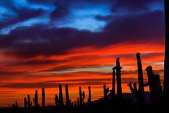 Fading Sunset (Carl Cohen_Pics) Tags: superstitionmountain sunset clouds cloud cactus cacti saguaro blue red dusk pinalcounty apachejunction arizona spring nature sky evening desert southwest desertlandscape canon canon7dmarkii