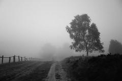 Schwermütig (Gret B.) Tags: grau trüb schwarzweis lüneburgerheide heide heidelandschaft landschaft baum tree tristesse trauer melancholie schwermut depression nebel morgen morgens morgennebel morning düster