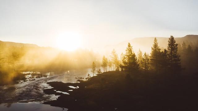 Misty morningin the forest