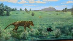 306  Sheffield, town of murals (Brigitte & Heinz) Tags: australia australien australie sheffieldmurals townofmurals tasmania tasmanien tasmanie