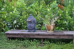 Buddha watches over our Japanese Garden
