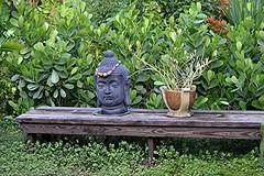 Buddha watches over our Japanese Garden (jungle mama) Tags: japanese garden buddha devilsbackbone clusia argentinianivy bench biscayneparkflorida susanfordcollins bromeliad bead necklace yucca firespike ceramic pedilanthus euphorbia pedilanthustithymaloides slipperflower jacobsladder