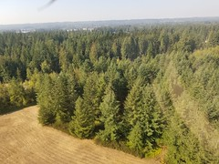 2018. Western red cedar dying from drought. Arlington, Washington. (USDA Forest Service) Tags: usda usfs foresthealthprotection forestservice stateandprivateforestry region6 r6 washington aerialdetectionsurveys aerialsurvey foresthealth aerialdetectionsurvey ads forestdamage monitoring monitor detection 2018 westernredcedar cedar drought deadtrees aerialphoto oblique low arlington