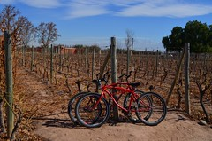 Vistandes, Maipú. 🚵🍷️☀️ (riegoden) Tags: winelovers winecellar winetime wein vinho vin wineregion travelphotography winery winetasting redwine nature montagne montain andes paisajesnaturales discoverearth bike biketour outdoorlife beautifulplace panorama neverstopexploring naturelovers visualoflife cycletouring travelbybike biketravel bicycletouring argentina mountains wordbybike bicycletrip mendoza bodega biketrip sky skylovers