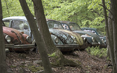 The Volkswagen Graveyard (Sean M Richardson) Tags: abandoned volkswagen vw bugs beetle old classic vintage colors canon rust decay derelict historic nature cars car photography detail