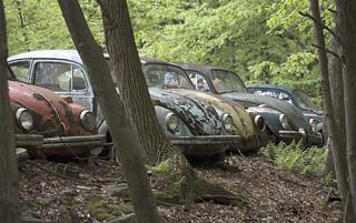 The Volkswagen Graveyard