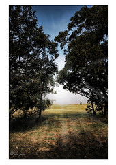 Misty Sunrise (Peter Polder) Tags: trees tree mist fog morning sunrise grass landscape sky field forest