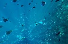 Bunaken underwater (vic_206) Tags: underwater sub dive snorkel snorkeling bunaken sulawesi indonesia goprohero5