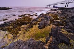 Bowen Island (kelvinsei) Tags: bowenisland bridge seaweed longexposure tree woods rock sea