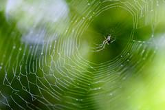 DSC_8823 (Stacey Conrad) Tags: d7500 lehighton nikon owlcreekhideaway pa pennsylvania unitedstates us spider web green