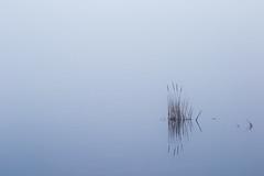 silence (renatecamin) Tags: water fog nebel lake see