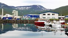 P1170973 (Tipfinder) Tags: iceland island reykjavik akureyri siglufjörður húsavík goðafoss goðafosswaterfall mývatn mývatnlake mývatnsee lakemývatn dimmuborgir reykjahlíð egilsstaðir seyðisfjörður eskifjörður reyðarfjörður höfn jökulsárlónglacier jökulsárlón fjallsárlón víkímýrdal hella selfoss selfosskirkja hellisheiðarvirkjun vikinmaritimemuseumreykjavik vikinmaritimemuseum thehúsavíkwhalemuseum whalemuseumhusavik whalemuseum thegeothermalenergyexhibition sagamuseum sagamuseumreykjavik theherringeramuseum theherringeramuseumsiglufjörður