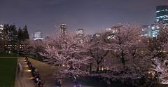 Midtown Sakura Lightup - Tokyo, Japan (inefekt69) Tags: japan tokyo midtown lightup trees illuminated illumination sakura cherry blossoms flowers nature spring hanami nikon d5500 日本 東京 さくら 桜 花見 night 六本木