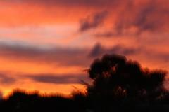 Beautiful anger (Mama Rhodes Photography) Tags: sunset blur impressionism intentionalcameramovement icm trees