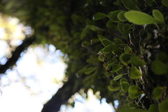 reference-171 (TLCStudentReferences) Tags: helenastackhouse leaves newzealand tree texture bokeh web lichen moss nz flowers