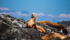 Well, hello! (ashpmk) Tags: sea seaanimals animal animalphotography animalportrait sanjuan weekend