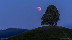 Meet the Tree -  Lunar eclipse 2018 (SteffPicture) Tags: baum landschaft nacht natur steffpicture stephanreber sterne wiese lunareclipse mond mondfinsternis tree lunareclipse2018 eclipse myswitzerland