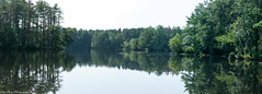 The pond of tranquility. (kuntheaprum) Tags: paddleboarding photography stearnspond lotus flower mushroom nixy nikon d80 50mm f18