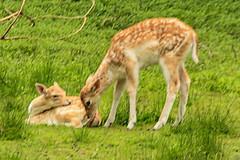 IMG_9428 (karlheinz.nelsen) Tags: essen städte ruhrgebiet gruga messeessen natur tiere