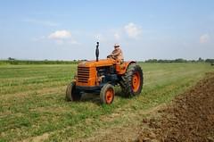 Aratura d'epoca (samestorici) Tags: fiat80r trattoredepoca oldtimertraktor tractorfarmvintage tracteurantique trattoristorici oldtractor veicolostorico