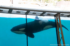 Marineland (David-photopixel-bzz) Tags: dauphins dauphin marineland antibes poissons orques orque parc aquatique
