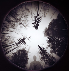 In the reed (batuda) Tags: pinhole obscura stenope lochkamera analog analogue lid juice kubus 45 round circular paper ilford ilfospeed d76 11 9950f wide wideangle low angle nature lake reed reeds plants lysimachiathyrsiflora tuftedloosestrife šilingė human taurapilis tauragno ežeras tauragnai utena lithuania lietuva aukštaitijos nacionalinis parkas puokštinėporaistė