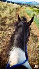 The best view (Hirvimaki) Tags: farmlife countryliving horses cowgirls heppa hevonen hevoset