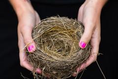 Nest (Thomas Hawk) Tags: america angela bayarea california eastbay mountainviewcemetery oakland sfbayarea usa unitedstates unitedstatesofamerica westcoast cemetery us fav10 fav25 fav50
